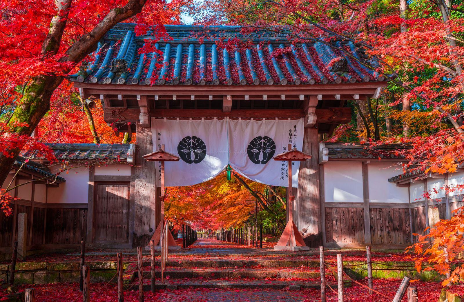 紅葉シーズンの京都の光明寺