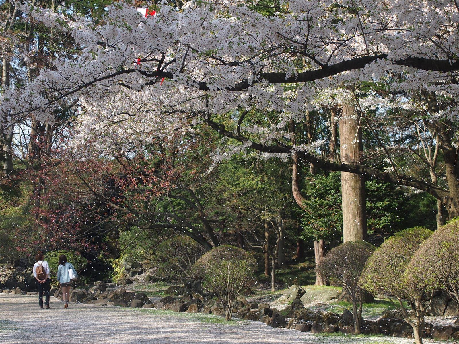 能代市の千秋公園