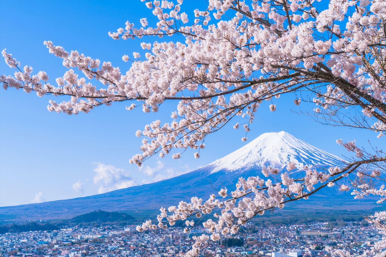 冬が終わり、暖かくなってきてどこか旅行に出かけたいと考えている方もいるのではないでしょうか。今回は、春(4月~5月)におすすめの観光地をご紹介します。