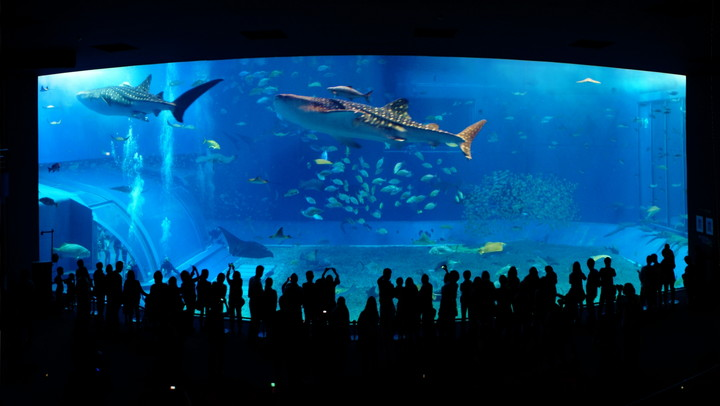 美ら海水族館(沖縄県)