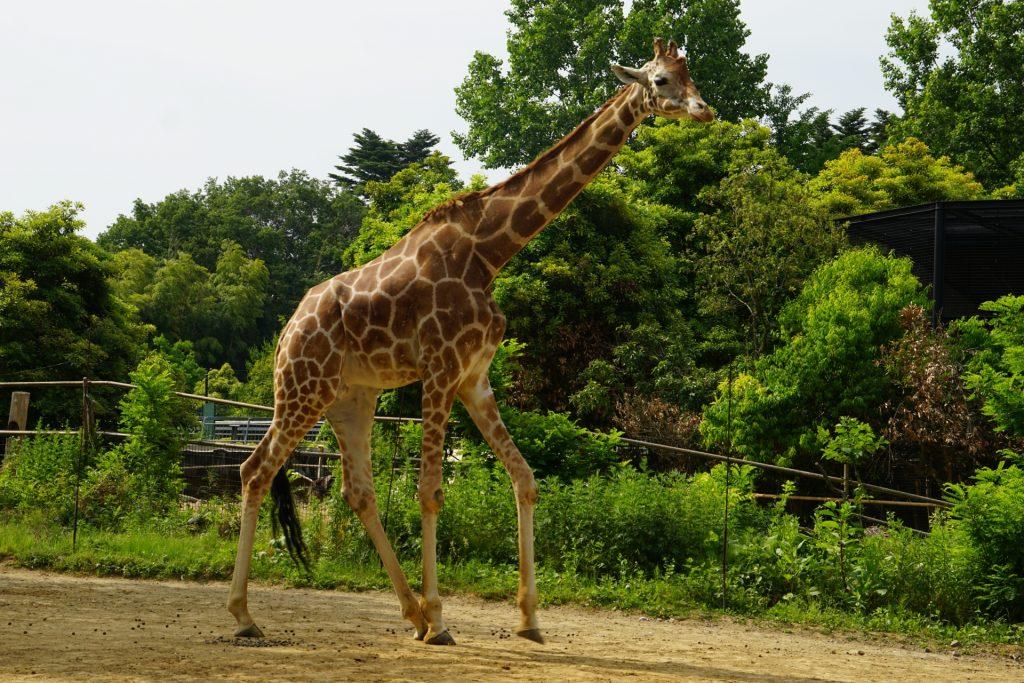 八木 山 動物園