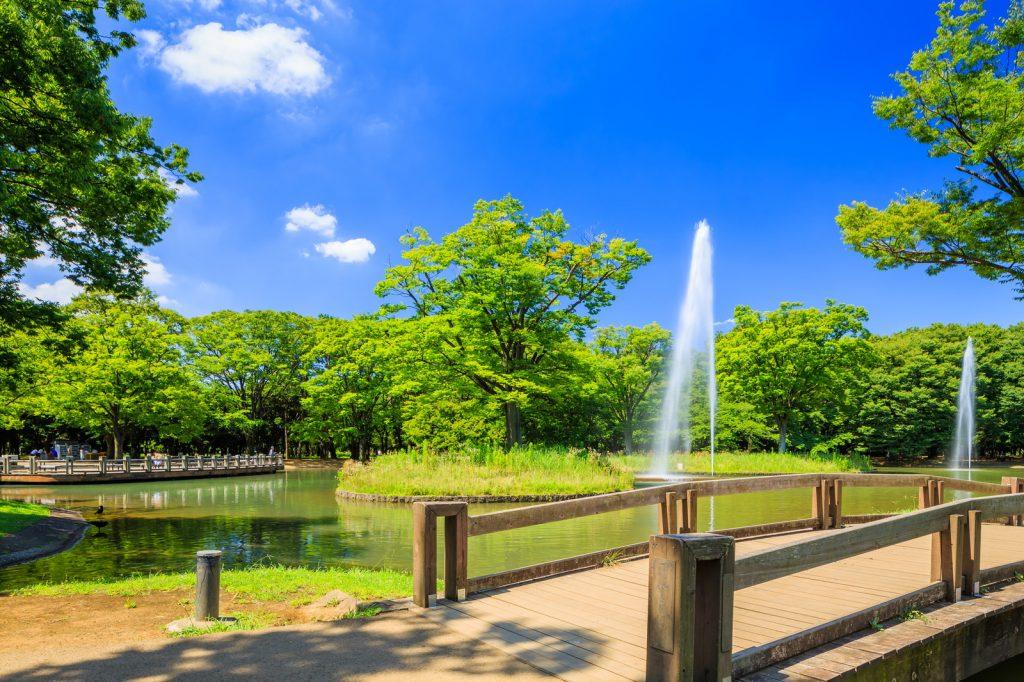 都心のオアシス!代々木公園の見どころ・楽しみ方をご紹介 | エアトリ - トラベルコラム